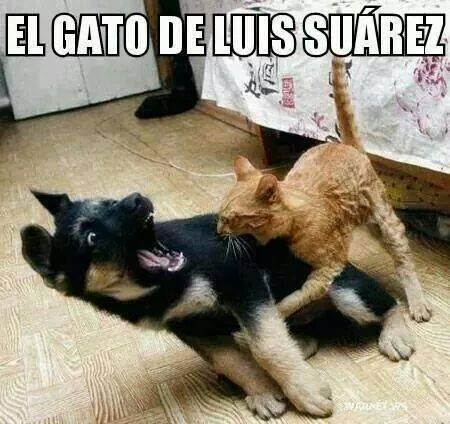 [MEME] El gato de Luis Suárez muerde a un cachorrito..lo más compartido
