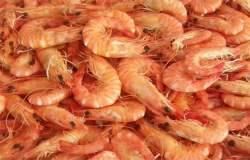 Empresarios peruanos dejarán de importar crustáceos desde cuatro mercados.