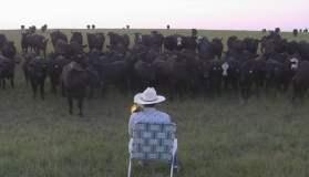 [VIDEO] Impactante: Granjero hipnotiza a vacas con canción de Lorde