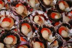 Las conchas de abanico son bien demandadas principalmente por los países de la Unión Europea.