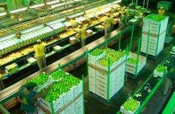 El limón lambayecano es un producto potencial para ser exportado al mercado ruso.