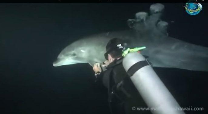 [VIDEO] Insólito: Delfín le pide ayuda a buceador, mira lo que pasó