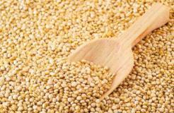 Dentro del periodo enero-agosto, los granos andinos nacionales – como la quinua – llegaron a un total de 53 mercados.