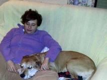 Sacrificaron a Excalibur, el perro contagiado con Ébola, pese a protestas