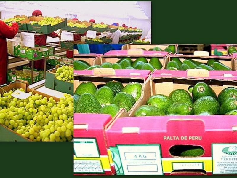 El rubro agrario No Tradicional concentró el 65% del total de exportaciones peruanas hacia los Países Bajos (Holanda).