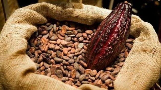 El cacao en grano fue uno de los productos con valor agregado que impulsaron las exportaciones nacionales del sector agro.