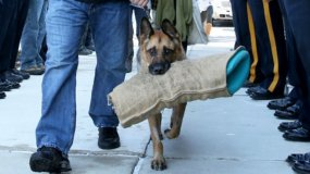 Emotiva despedida a un perro policía antes de ser sacrificado [FOTOS]
