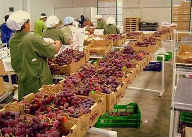 En el 2014, las uvas peruanas se exportaron a 65 mercados, de los cuales 12 de ellos se sumaron a la lista por primera vez.