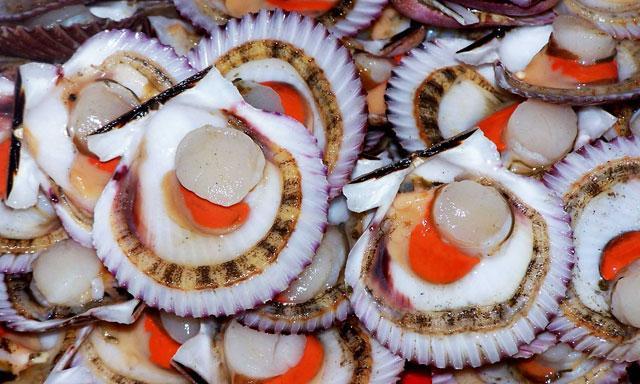 Las conchas de abanico aportaron en las exportaciones peruanas a Francia con un valor superior a los US$ 11 millones.