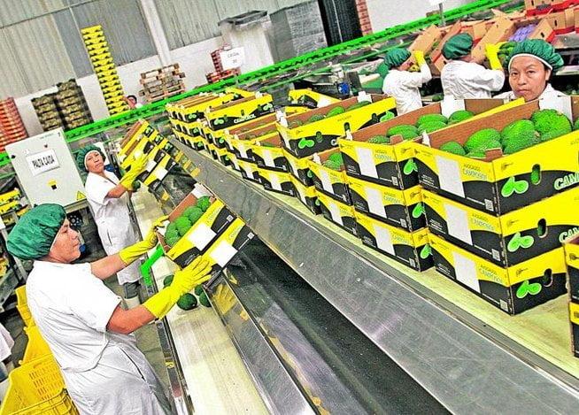 Los productos agros con valor agregados lideraron exportaciones a los Países Bajos.