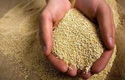 La quinua se ha convertido en un gran alimento para los taiwaneses.