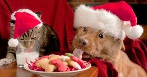 La noche buena está a la vuelta de la esquina y muchas personas amantes de las mascotas ya están realizando sus preparativos para la fecha.