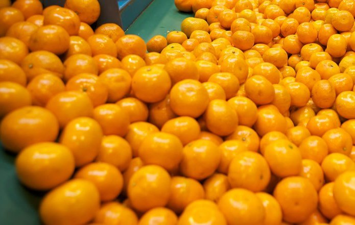 El 17% de la producción peruana de mandarinas se exporta a los diversos mercados.