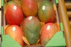 El mercado europeo fue el principal importador de mangos peruanos.
