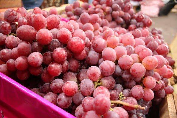 Las uvas peruanas  se posicionarán en California y la Costa Este de Estados Unidos.