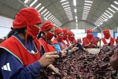 La páprika fue el producto agroperuano más exportado durante el primer mes del año en curso.