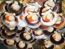 Las conchas de abanico provocaron la caída del rubro acuícola.