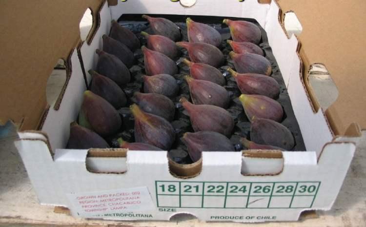 Los higos frescos peruanos ya pueden exportarse a los Estados Unidos.