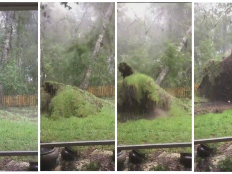 Impactante: huracán Matthew arrancó árbol de raiz [VIDEO]