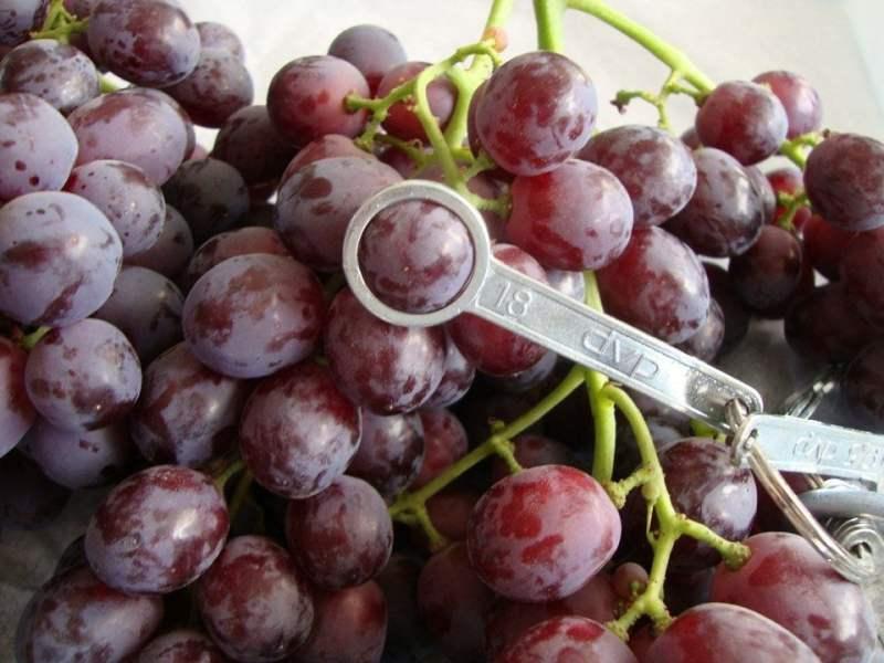 Peruanos negociaron la uva de mesa en el mercado surcoreano.
