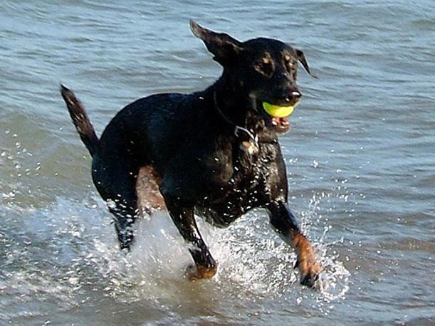 Mascotas playeras en problemas en Ancón