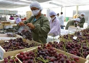 La uva peruana es un producto con gran aceptación en la India.