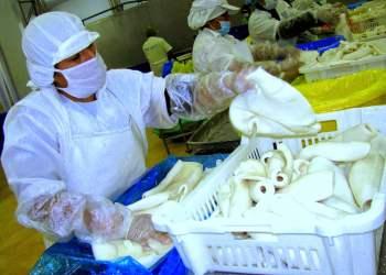 La pota peruana se exportó en diversas presentaciones.