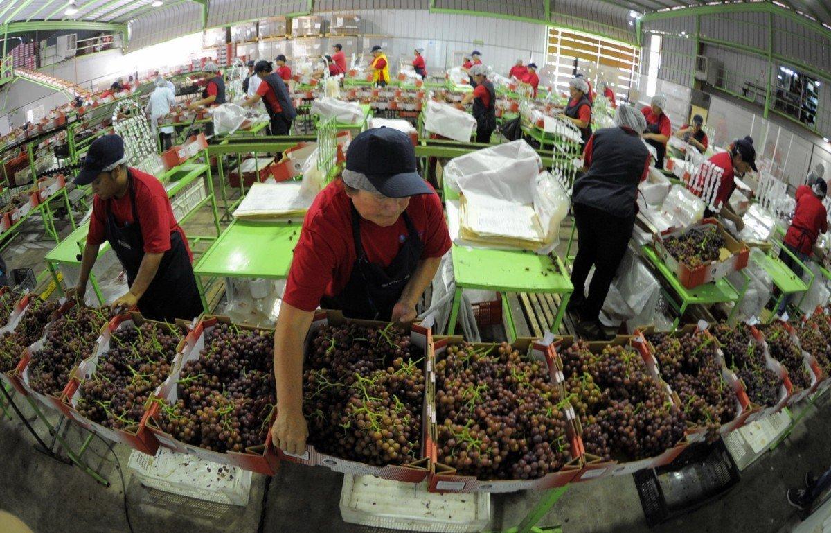 ADEX: Exportaciones agros a Indonesia aumentaron en valor durante el primer semestre