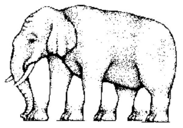 4- ¿Cuántas patas tiene este elefante?