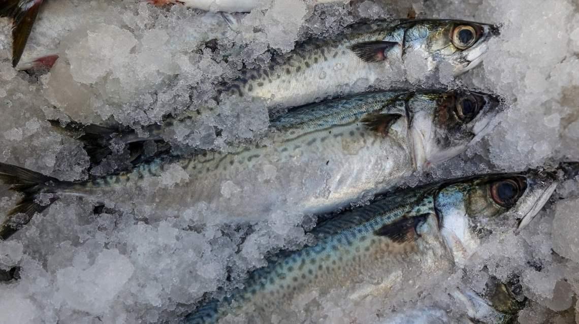 El pescado es un alimento sano