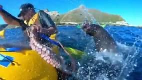 La foca, el pulpo y un hombre en kayak