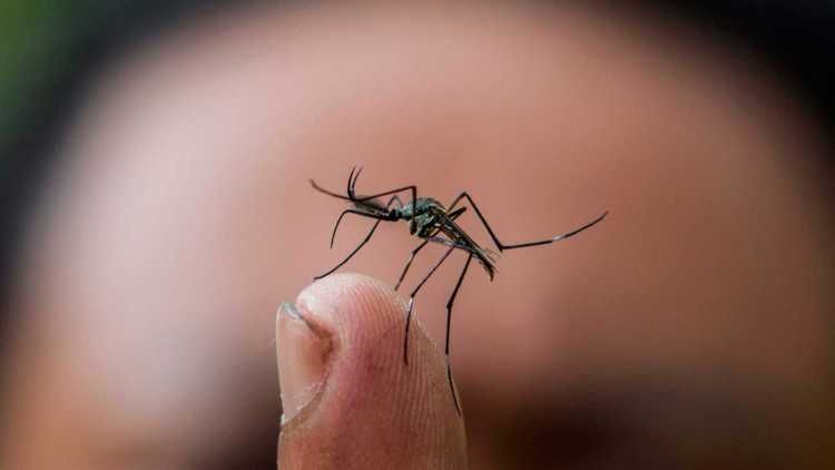Alerta por mosquito trasmisor del dengue en el Perú