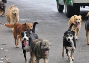 SOAT para mascotas atropelladas por malos choferes al debate