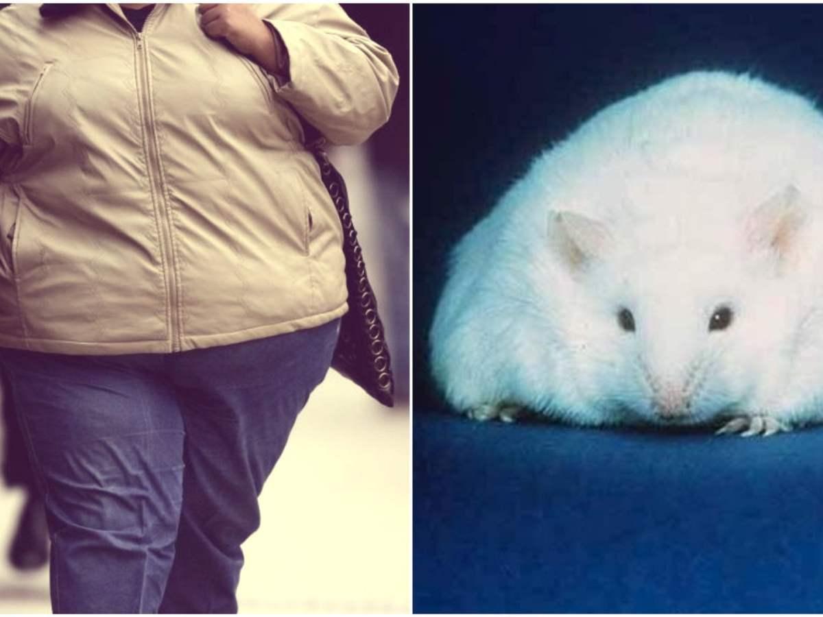 Estudio en ratones revela que el té verde reduce la obesidad