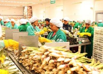 Adex: Exportaciones suman US$ 7,159 millones y caen en bimestre del 2019