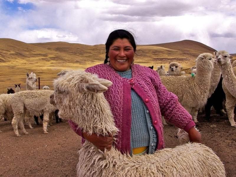Mujer y alpacas