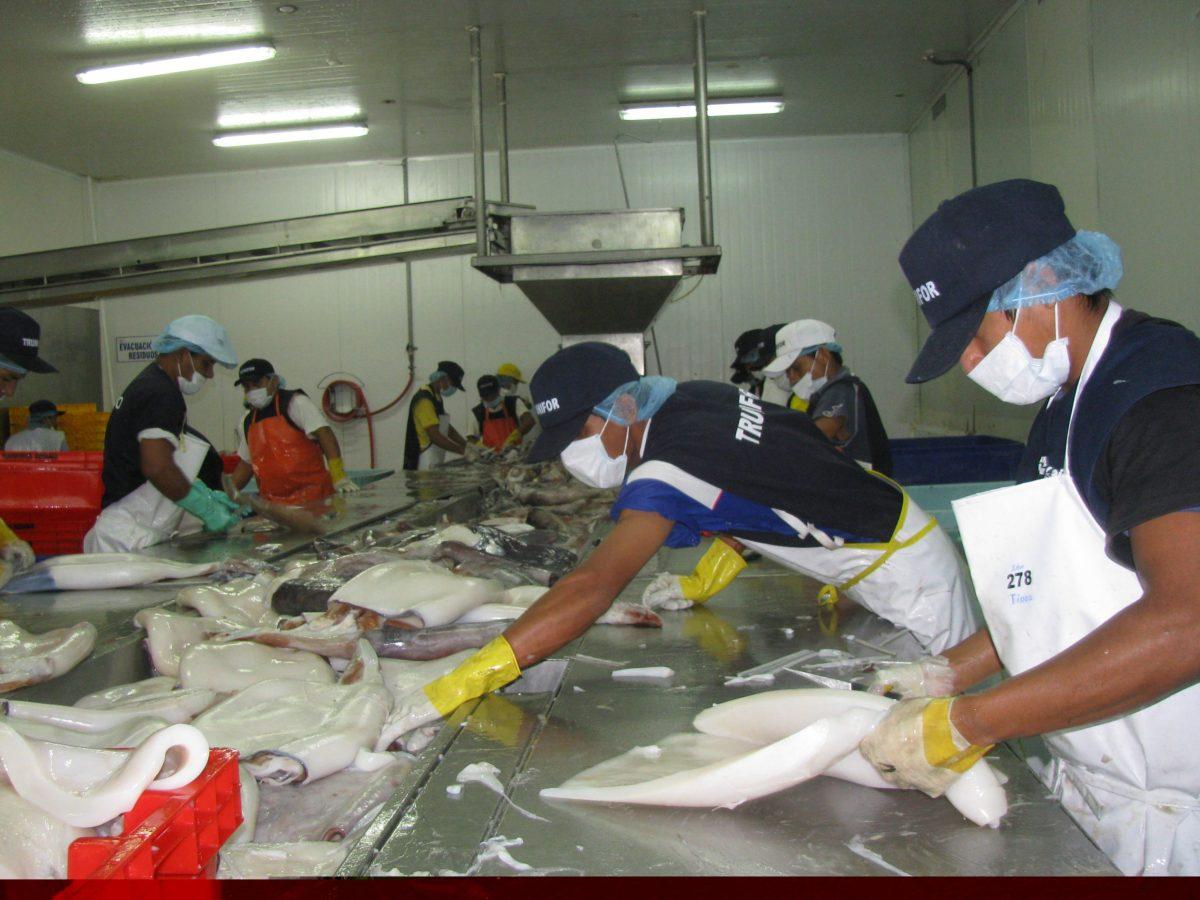 Exportación de pota