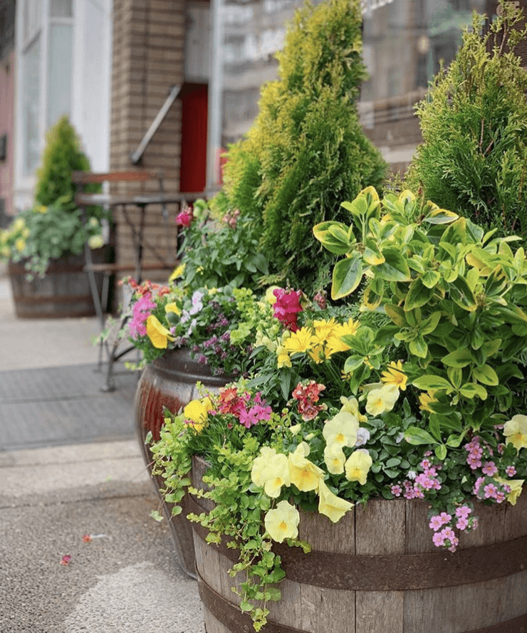 subscription planters window boxes