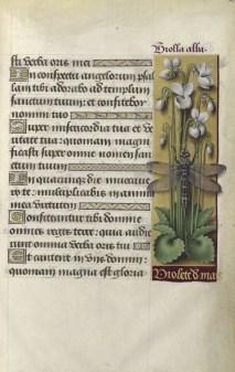 Grandes Heures d'Anne de Bretagne : Folio 238