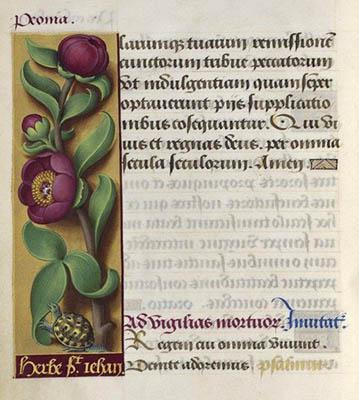 Grandes heures d'Anne de Bretagne - Folio 245 - Pivoine.