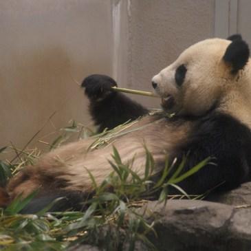Visiter sans vous ruiner : le zoo d'Ueno