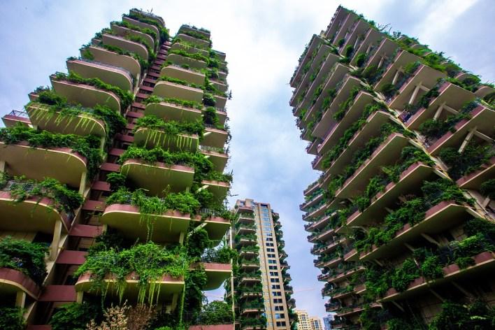 هل يخفق مشروع الغابة العمودية في الصين بسبب البعوض؟