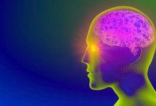 صورة التحكم بالدماغ من خلال الضوء وعلم البصريات الوراثي