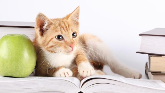 cat-study