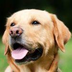 飼い犬のうんちとるためにトイペを持ち運んでるワイ、暴風に負ける