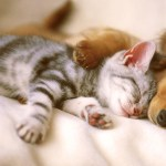飼い主の目を盗んでソファで爪を研ぐ猫の「寝たふり」が可愛すぎるw ほか
