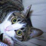 「餌やり禁止」看板に描かれた猫のイラストが衝撃的すぎるwww