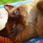 ダイソン。猫がくつろげるただ1つの扇風機。(2時間半このままだよ。)