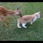 小鹿にひたすら舐められる猫