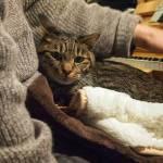 隠れることを覚えたネコの「かまってアピール」がカワイイw